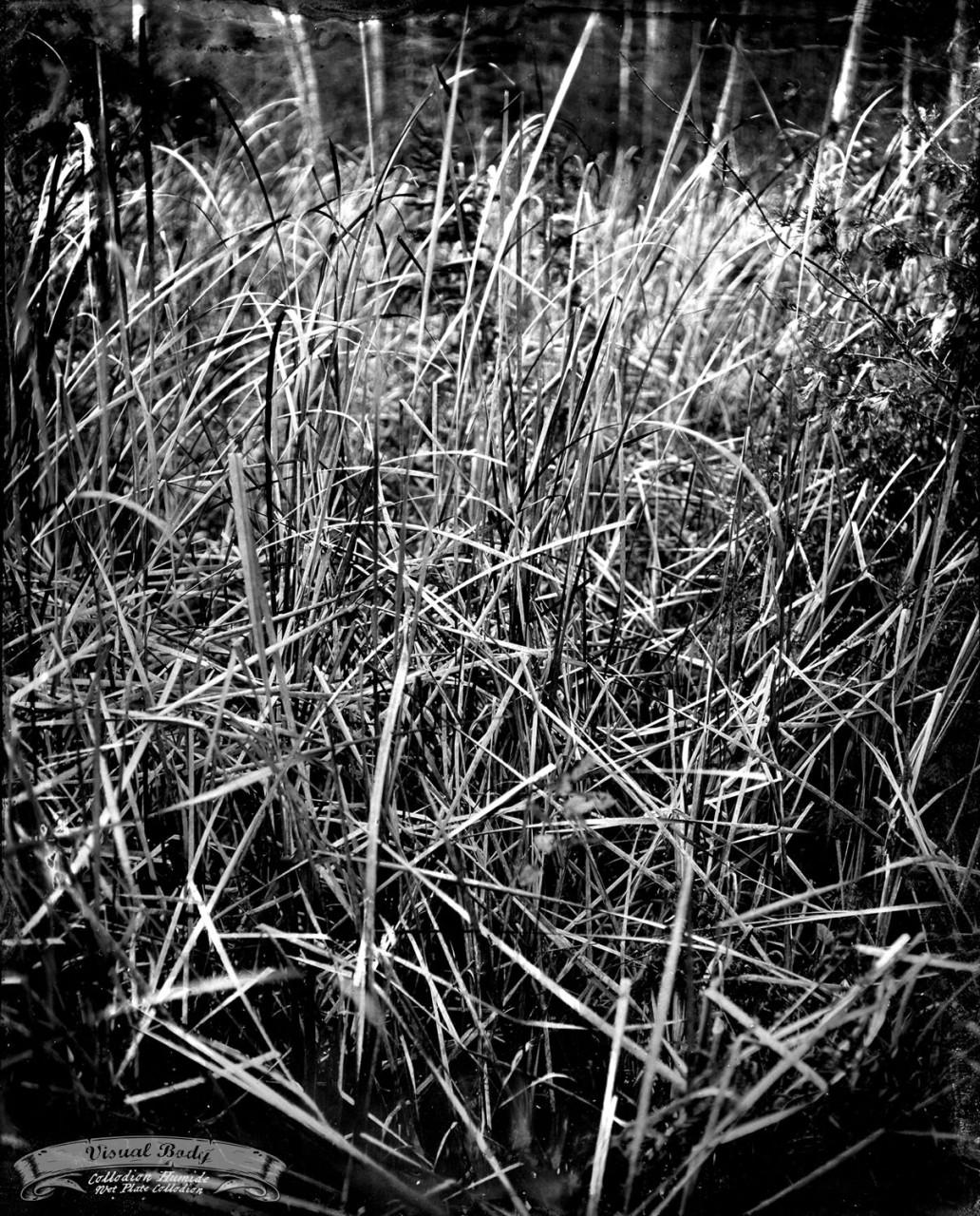 Paysage / Landscape