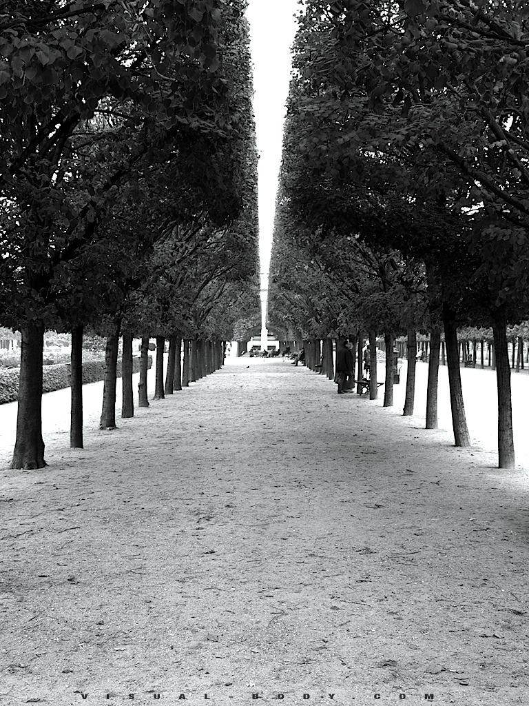 Allée d'arbres au Louvre, Paris